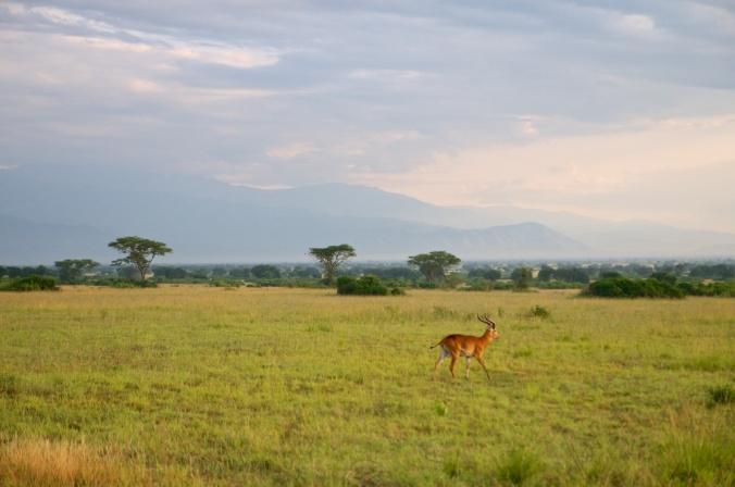 safari 002