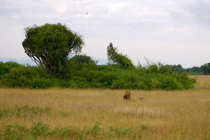 safari 003
