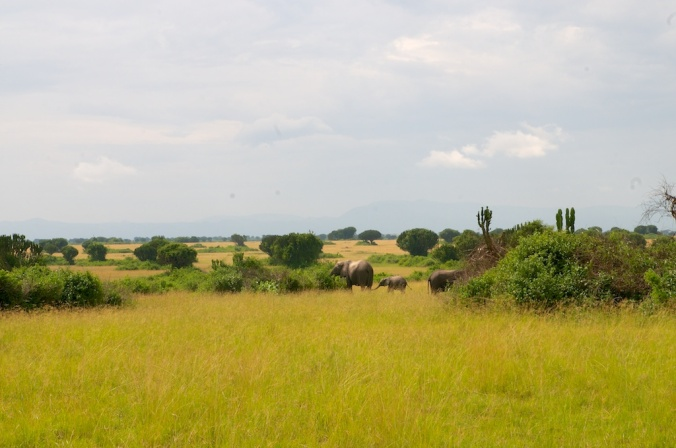 safari 006